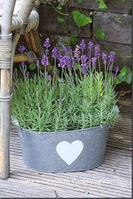 Smell the lavender aroma