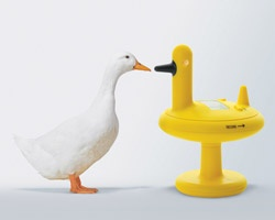 duck timer by eero aarnio for alessi