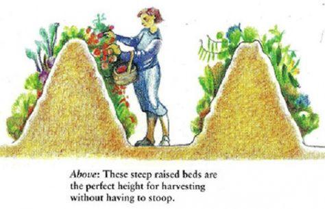 Вместо того, чтобы сжигать ветки, листья и скошенную траву после чистки вашего огорода и сада вы могли бы построить Hügel грядку, больше известную, как высокая грядка Хольцера. Проще говоря это большо...