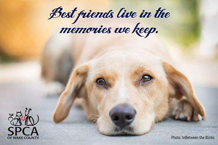 O sofrimento pela perda de um animal de estimação não é socialmente tão bem aceite como a de um ente querido mas todos nós sofremos horrores!