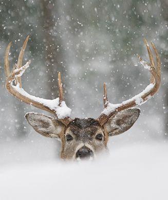 Deer Hunting Tips: Strategies for Big, Late-Season Bucks