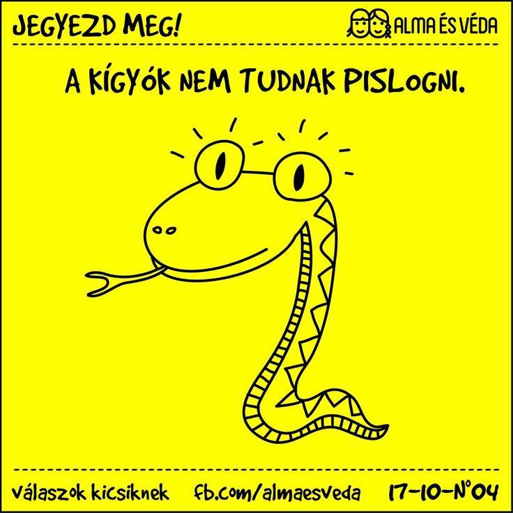A kígyók nem tudnak pislogni.