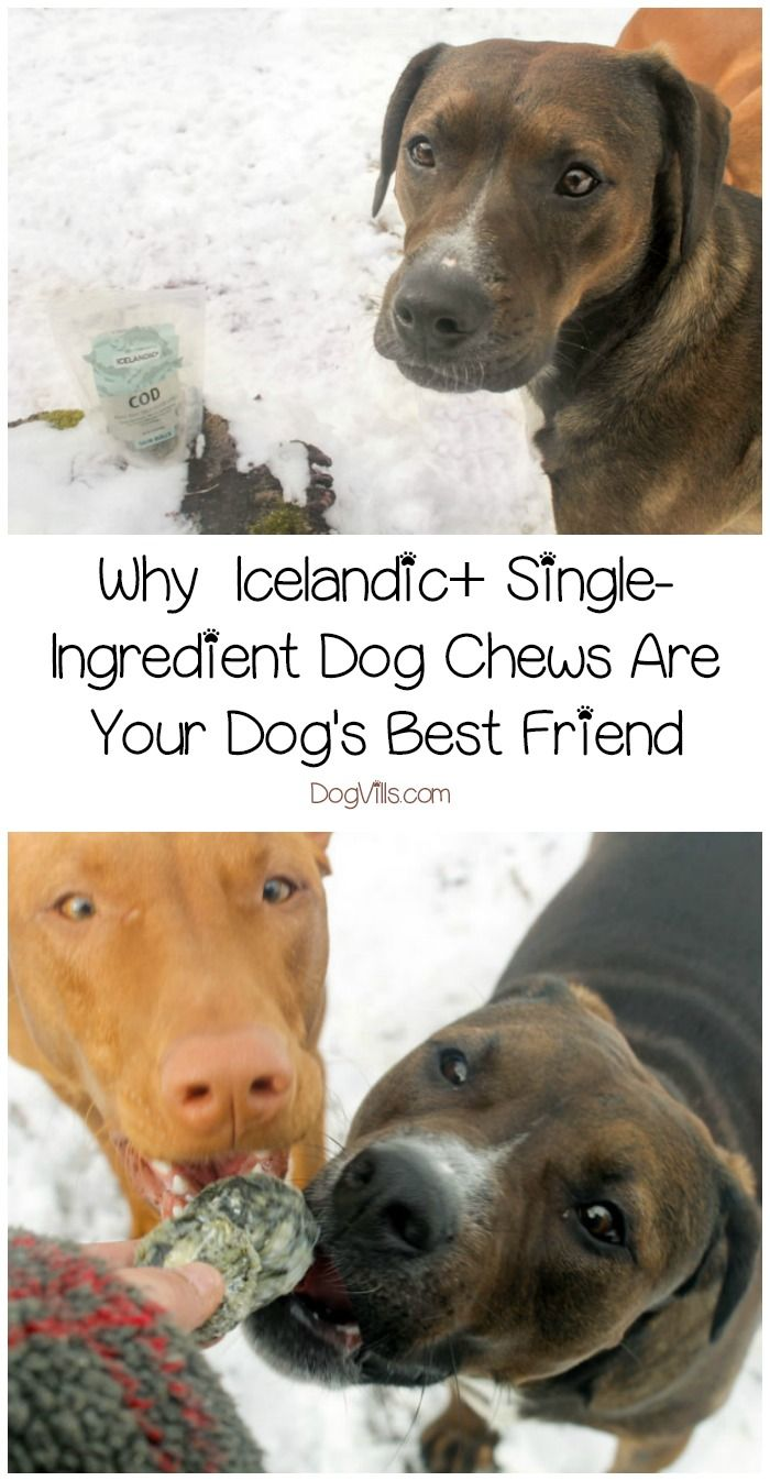 When you have a dog prone to allergies and skin sensitivities, single-ingredient dog chews and treats are your best friend's best friend! Check out our Icelandic+ Dog Chews review to find out why they're our top choice! #ad