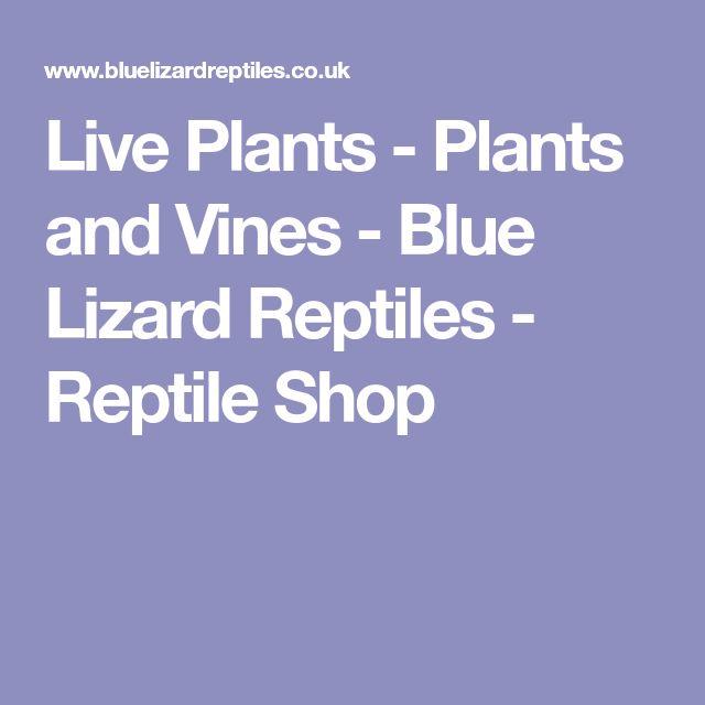 Live Plants - Plants and Vines - Blue Lizard Reptiles - Reptile Shop