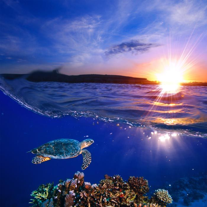 Coral Reef Sous Sunset Sky