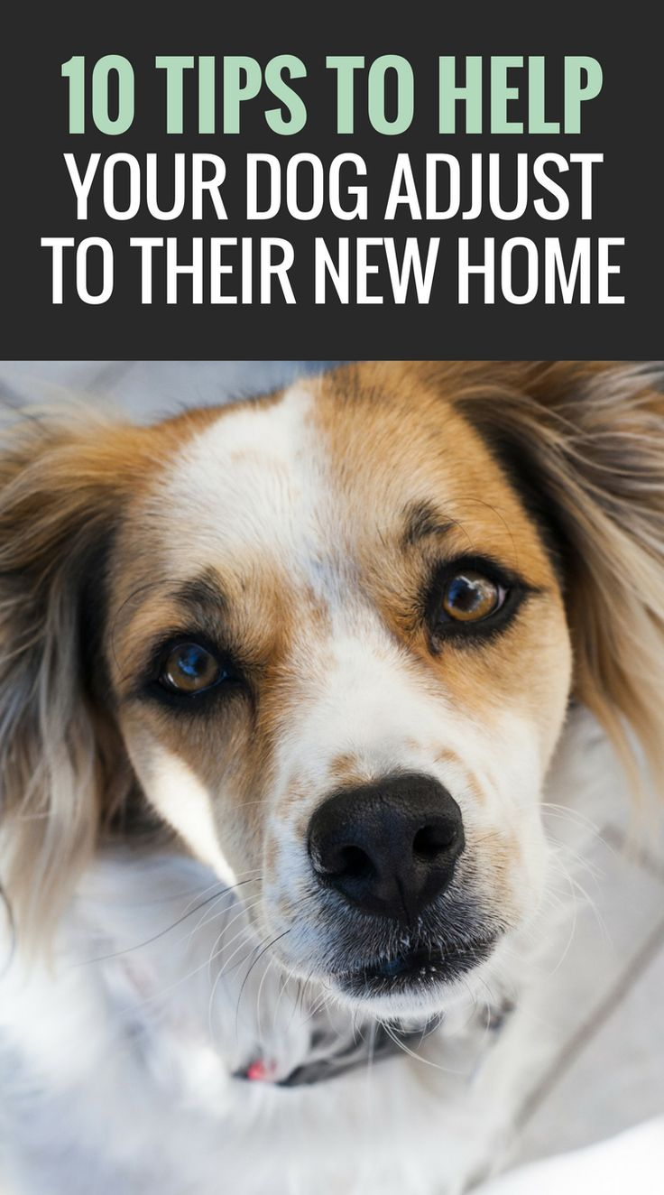 Did you just adopt a dog? Here are 9 simple tips to help your adopted dog adjust to a new home. @KaufmannsPuppy
