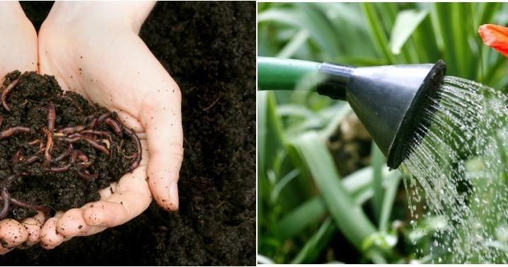 Cómo hacer que tus plantas crezcan mucho más rápido