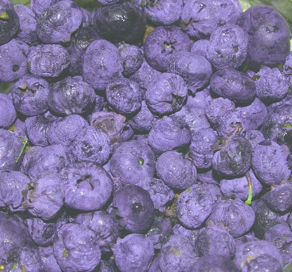 Blueberries are the easiest fruit to grow. Here are tips on growing blueberries, plus great blueberry varieties to choose. From The Old Farmer's Almanac Gardening Blogger.