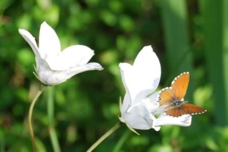 Butterfly and Flower - isn't this beauty? Kogelberg Biosphere and Pringle Bay is the place to discover the nature! Why dont you stay at Dreams? www.daydreams.co.za