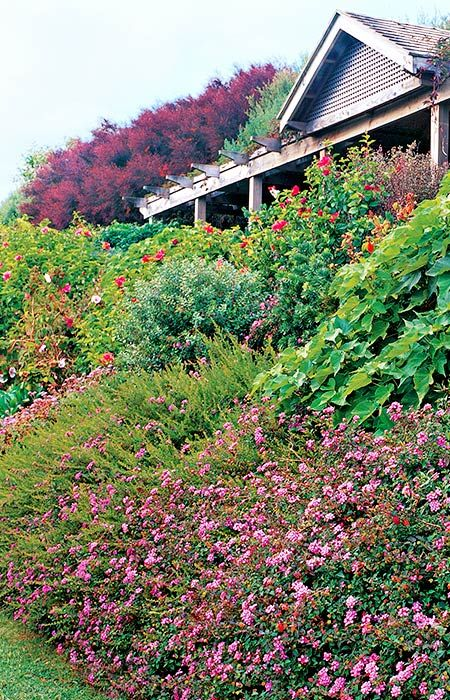 Landscaping a slope slopes can really set of low growing for Low bushes for landscaping