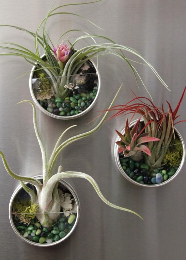 Learn how to make these small fridge terrariums with air plants, moss and tiny stones from HGTV Gardens.