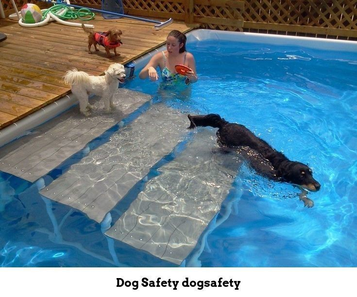 Dog Safety Tips For Camping With Dogs A Dog Friendly Packing Checklist Want To Take Your Pets On Above Ground Swimming Pools Best Above Ground Pool Dog Pool