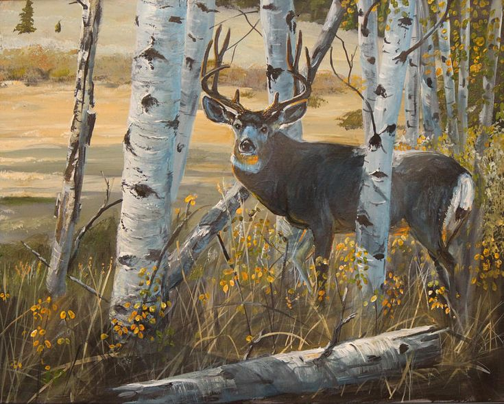A queue cerf, Buck Giclee Fine Art Print - cerf de Pennsylvanie ...