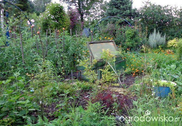 To właśnie tu - strona 331 - Forum ogrodnicze - Ogrodowisko