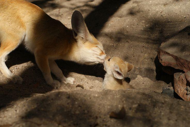 Foxy Desert. Fox spirit animal naked woman desert