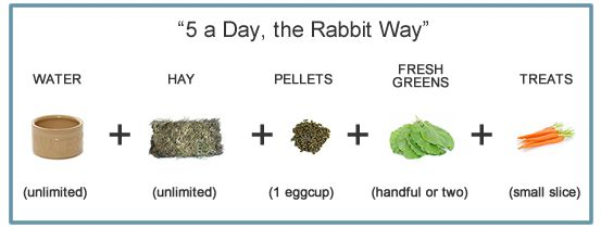 The five elements and proportions of a rabbit's diet