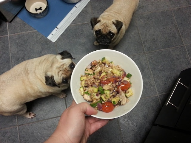 ... Pugs: Warm Farro Salad with Roasted Vegetables, Fontina, and Chicken