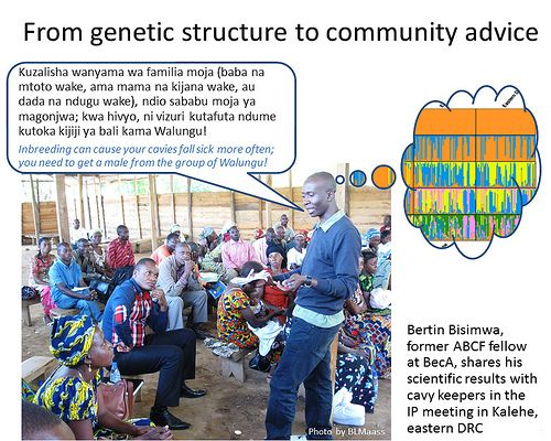 Molecular study makes a difference to guinea pig producers in eastern Congo