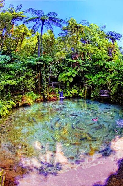 Rotorua, New Zealand - by Altus Wilder