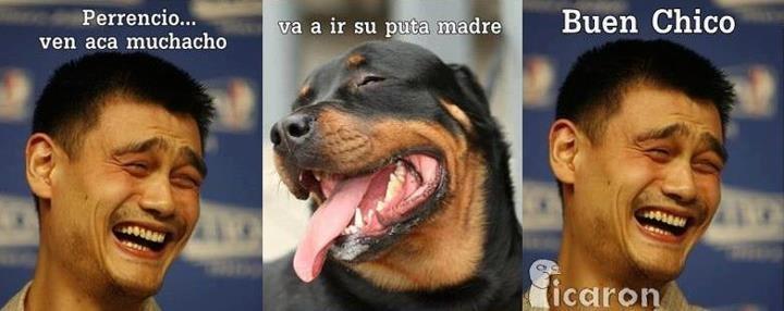 Hahaha Perrencio, ese es mi perro XD