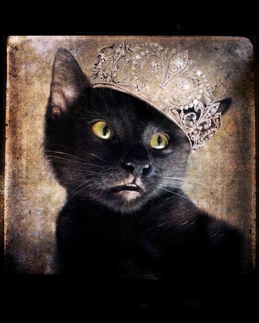 Black Cat Photo - Cat wearing a Tiara - Animal photography - Animal art - Gift for Cat Lovers - 8x10 Art Prints - Princess Moe on Etsy, $30.00