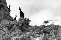 François Le Diascorn. Three curious goats in Loutro village Crete island Greece. https://francoislediascorn-us.com/portfolios