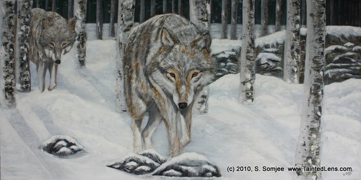Wolf in Snow Forest ***