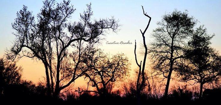 @CariB85 #sunset #lionsands © Caroline Brooker