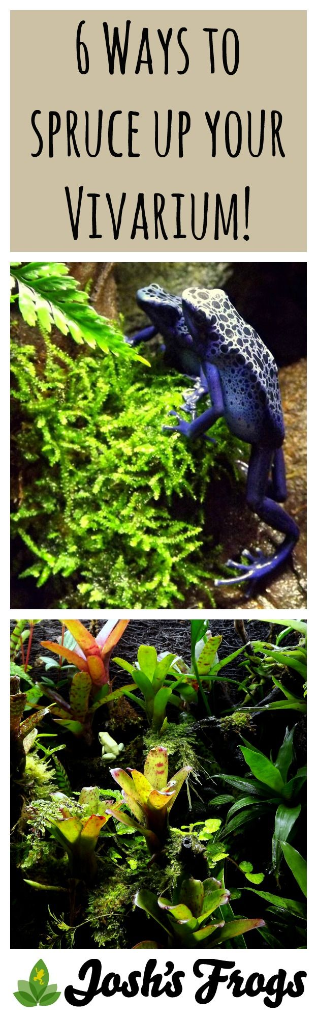 6 Ways to Spruce up your Dart frog Vivarium!                                                                                                                                                                                 More