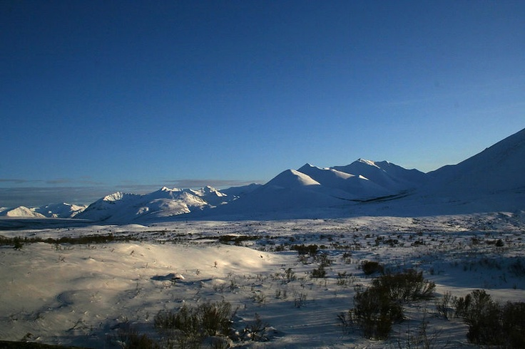 Photos that other people have posted from along the Dempster Highway in the Yukon