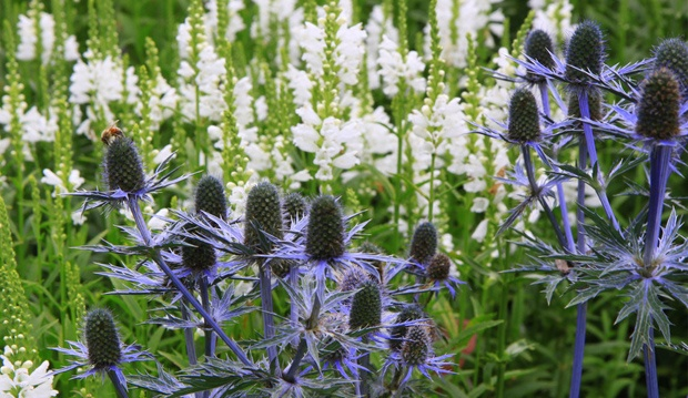 Members Preview May 8th, Open to the Public May 9th & 10th. A choice selection of hardy perennials, annuals, natives, herbs and vegetables, shrubs, vines, small trees and coveted plants from the TBG gardens. Friendly gardening advice available.  Picture from TBG website