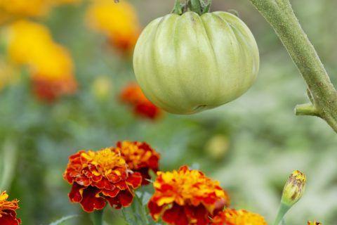 26 Wahnsinnig clevere Gartentipps, die Sie kennen sollten ~ Bienen und Rosen