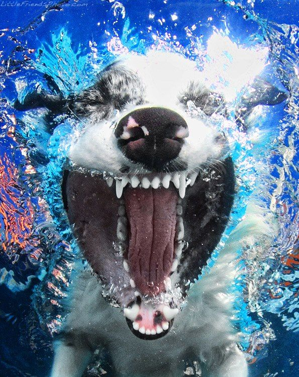 Amazing Underwater Dog Photography by Seth Casteel Happy Dog!!