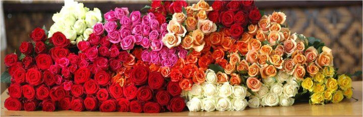 Bunga Mawar, Indah Dan Bermakna | Toko Bunga by Florist Jakarta