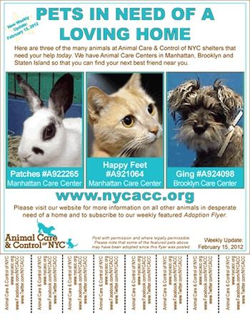 Animal Care Control Of Nyc Ac Sign Up For Weekly Adoption