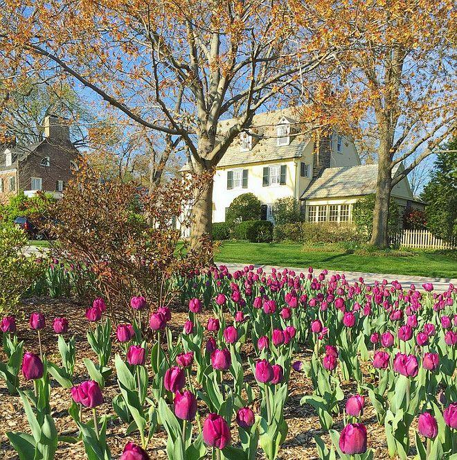 10 Bulb Garden Design Ideas: 1000+ Ideas About Tulips Garden On Pinterest