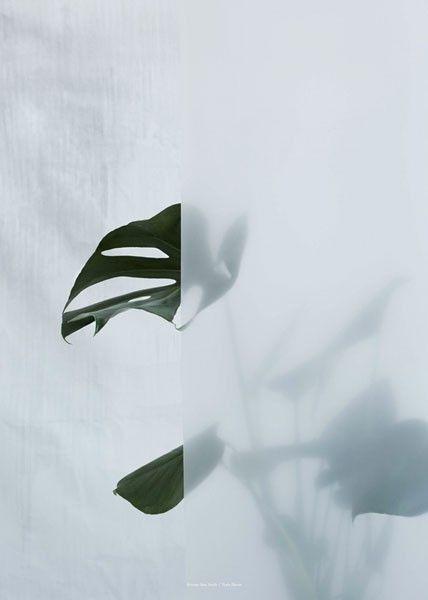 Kristina Dam Studio - Split-leaf Philodendron I |€54 |ENIITO