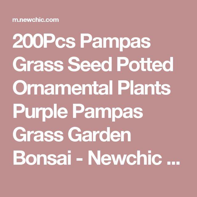 200Pcs Pampas Grass Seed Potted Ornamental Plants Purple Pampas Grass Garden Bonsai - Newchic Mobile.