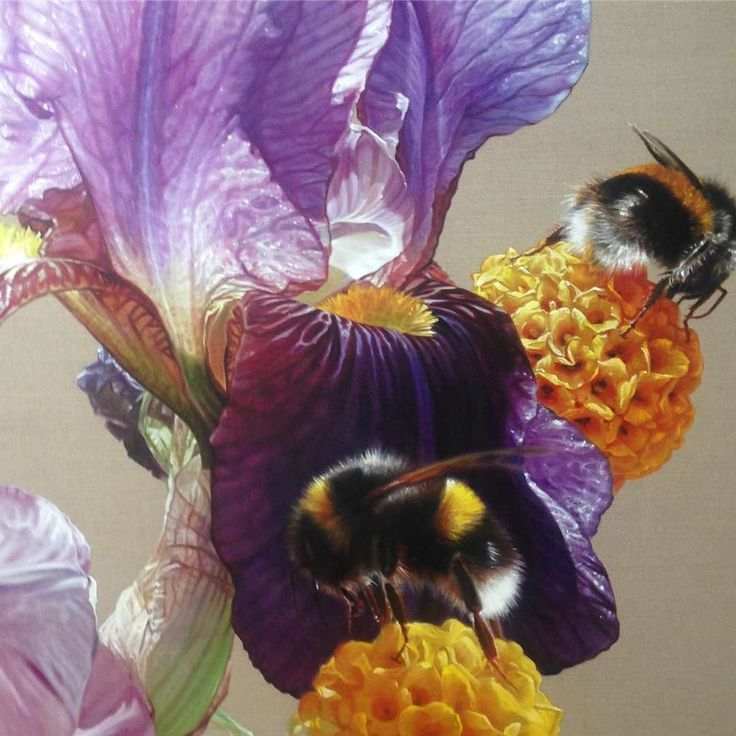 Revisiting a detail from my oil painting  Plegadis falcinellus.... Zoom in to see a rich juxtaposition of magenta orange and luscious purples. Scrumptious! Loved painting this... http://ift.tt/2tw3w8c - #gatesofparadise #annemiddleton #gbartconsulting #oilonlinen #oilpainting #bee #bumblebee #contemporaryart #iris #beardediris #colourmixing #colourinspiration #artinspiration #botanicalart #botanicalartist #purple