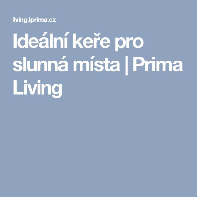 Ideální keře pro slunná místa | Prima Living