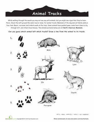 north american animal tracks science worksheets third grade and science. Black Bedroom Furniture Sets. Home Design Ideas