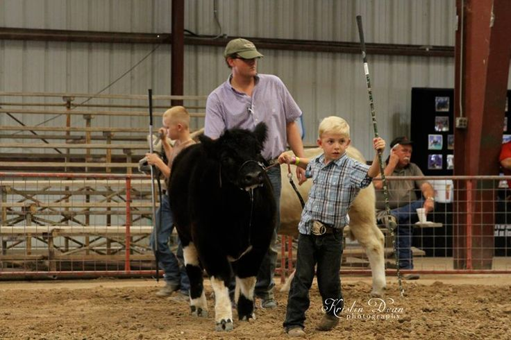 This little guy has the BIGGEST heart to show cattle!  More photos... www.kristindeanphotography.smugmug.com