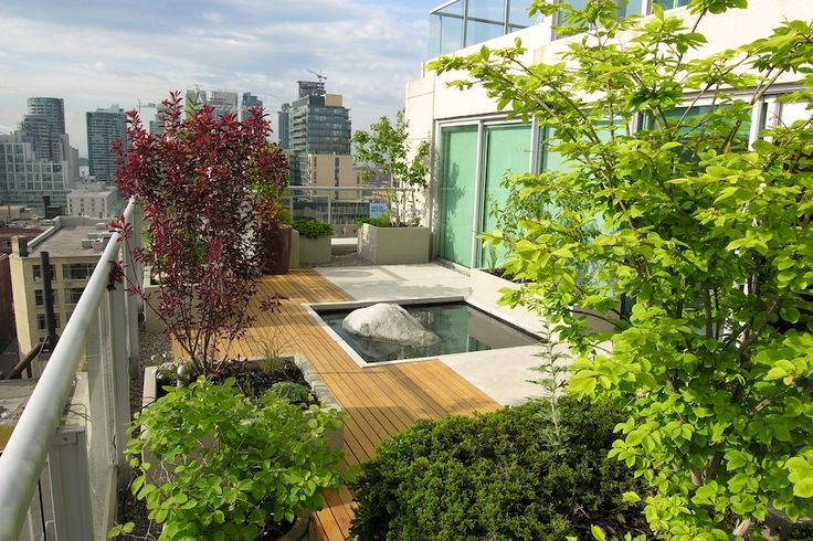 A penthouse suite terrace on two levels with southern and eastern exposure. Eramosa limestone and clear cedar deck sections create a graphic background to extensive plantings. The aluminium arbor supports a wysteria and provides shade, creating intimacy.