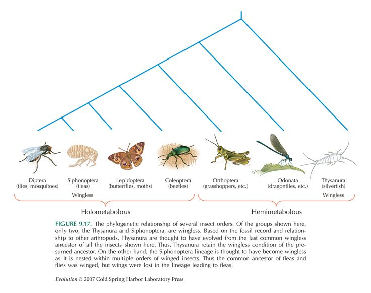 insect orders | ... 17. Phylogenetic relationship of several ...
