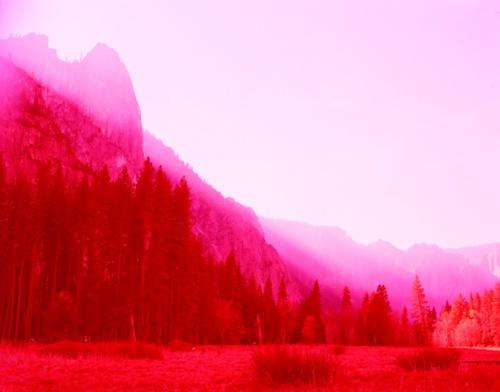 fucsiaBenjamin Sherri, David Benjamin, Gallery, Colors Photography, C Prints, Shades Of Red, Art, Hyperboreali, Photography Inspiration