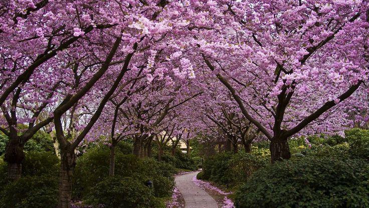 download free spring wallpaper hd