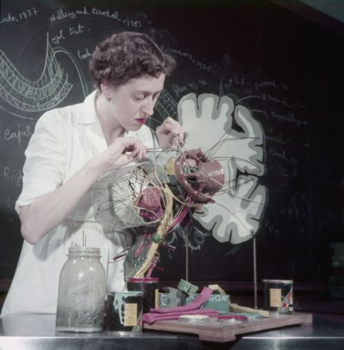 A woman working in science classroom at the Montréal Neurological Institute, 1954.Library and Archives Canada