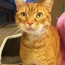 Treacle Cat Rehoming & Adoption Wood Green Animals