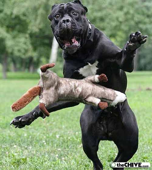 Best Perfect Timed Photos Images On Pinterest Funny Times - Photographer proves dogs can fly with funny perfectly timed photos