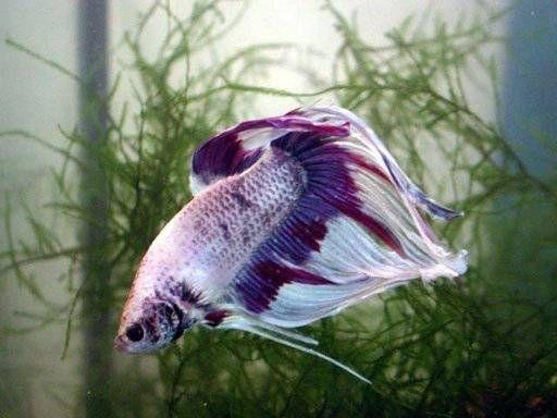 Las 25 mejores ideas sobre peces de agua dulce en for Los mejores peces de agua fria